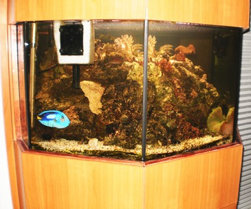 Aktuelles - Aquarium Lübeck und Technischer Gebäudedienst Sielaff